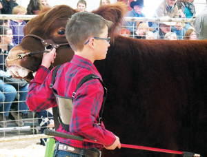 Jett Bradford of Panhandle 4-H was awarded Grand Champion Steer with his Heavy Weight Exotic Steer. Photo courtesy of Kinsey Brown