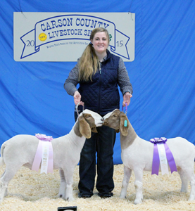 Abbie Brainard won Grand Champion and Reserve Champion Goat.
